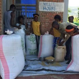 Rice Harvest 2021
